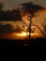 Sunrise galore